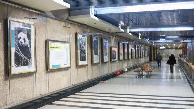 Photo of В галерее «Метро» на станции «Выставочная» открылась «Золотая коллекция»  В галерее «Метро» на станции «Выставочная» открылась «Золотая коллекция» BULB7149 390x220