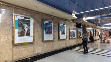 Photo of В галерее «Метро» открылась выставка Московского зоопарка В галерее «Метро» В галерее «Метро» открылась выставка Московского зоопарка BULB7231 1 390x220