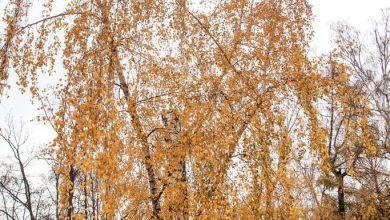 Photo of Акция #деревьяговорят в парке «Сокольники» Акция #деревьяговорят в парке «Сокольники» Акция #деревьяговорят в парке «Сокольники»                                          390x220